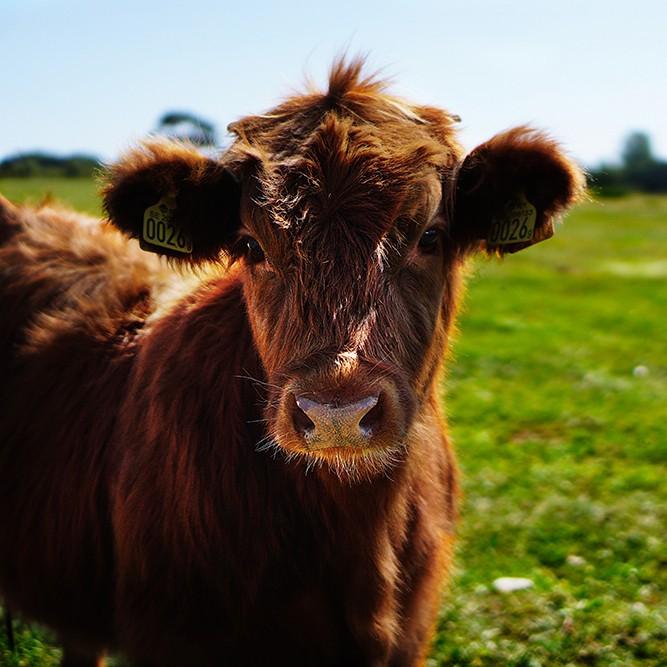 July Beef RMO