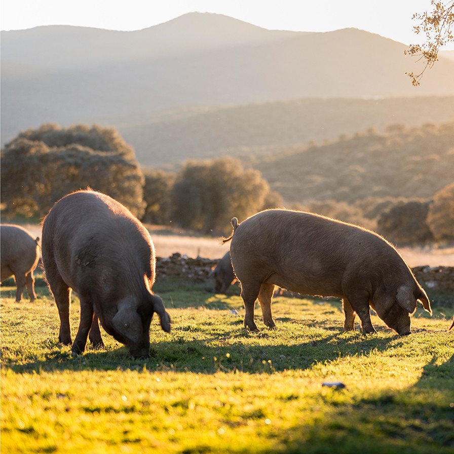 Pork RMO August